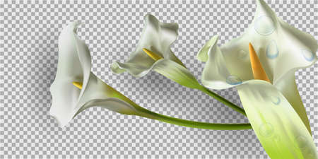 Colorful creative modern nature reality vector background with kala flower