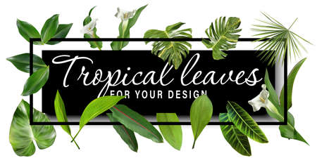 Vector horizontal tropical leaves banners on white background. Exotic botanical design for cosmetics, spa, perfume, health care products, aroma, wedding invitation.