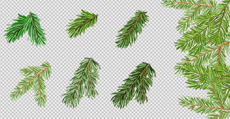 Pine tree branch brush on transparent background. Element for christmas or New Year design. Vector illustration for your design