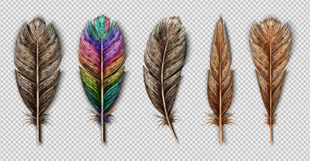 Realistic set with small and big multicolored bird feathers isolated on transparent background vector illustration