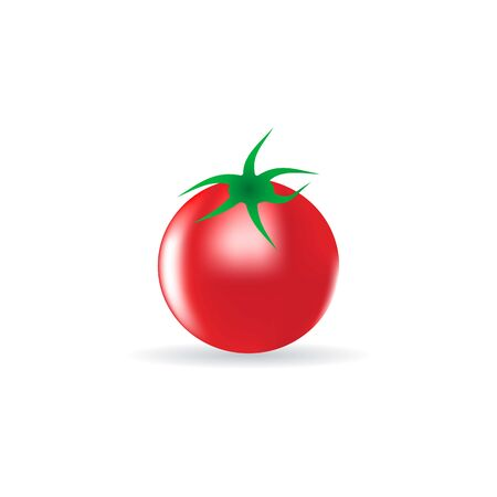 vector image of realistic tomato collected from a bed