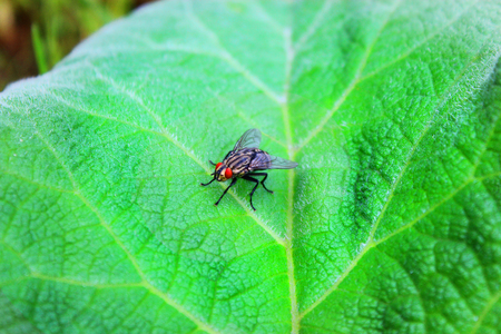 Fly sits on a green leaf Stock Photo