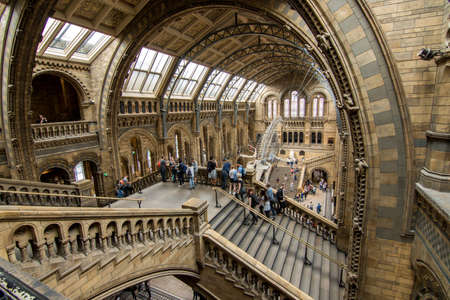 London, UK - July 25, 2017: People visiting the new Hintze hall in the Natural History Museum featuring a blue whale skeleton Editorial