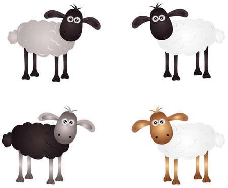 lamb: pecore Vettoriali