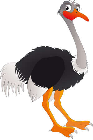 flightless bird:  illustration shows  ostrich Illustration