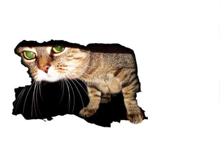 cat in white hole Stock Photo