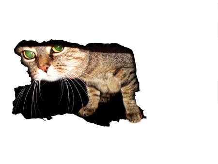 white hole: cat in white hole Stock Photo