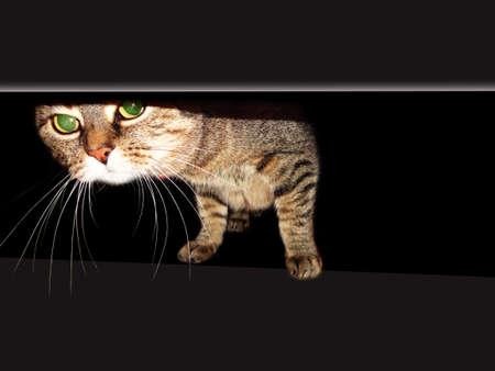 dun: cat