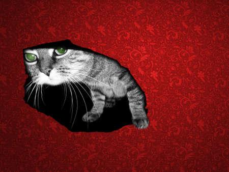 cat in hole