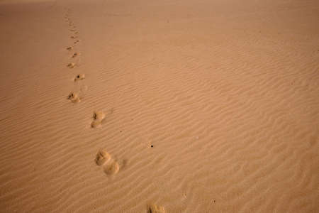 footprints in the sand on the beach photo