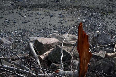 ビーチで壊れた枝の赤みがかったオレンジ色のインテリア