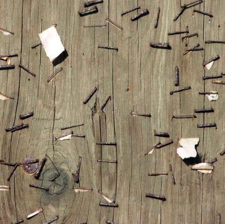 ステープルズと電柱のテクスチャです。明るい色の木製。背景。