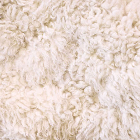 Photo of white furry wool as abstract texture background top view