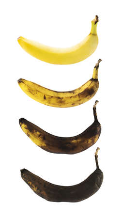 Fresh yellow spotless banana in a process of decompose rottening isolated over white background, set of four images Stock Photo
