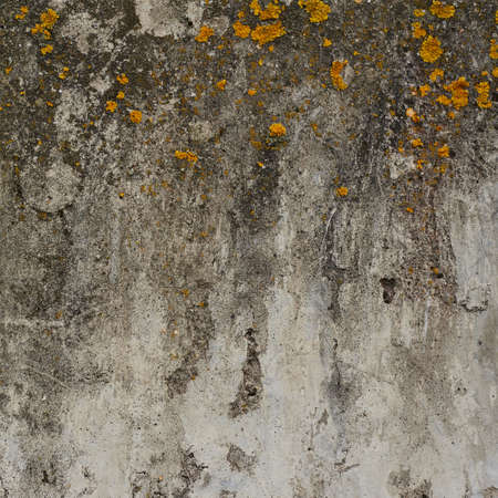 Old concrete wall covered with yellow lichen as abstract background texture photo