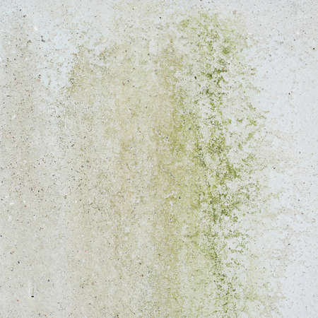 plaster mould: Concrete wall covered with mold as abstract background composition