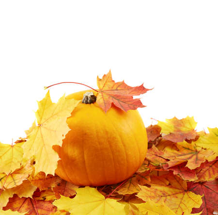 Orange pumpkin against turned yellow maple-leaf leaves composition isolated over white as a autumn Halloween copyspace background photo
