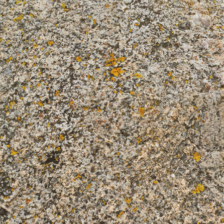 Stone surface covered with yellow lichen as a background texture Stock Photo - 23022914