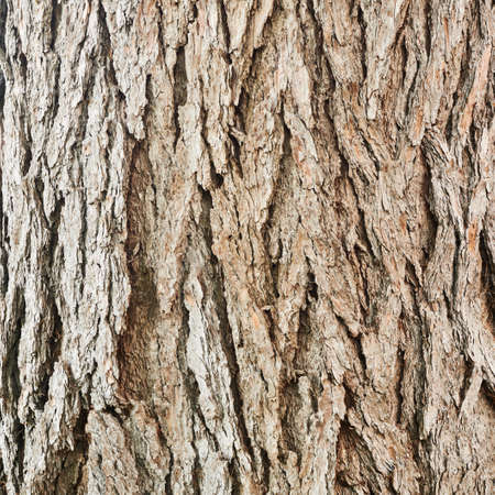 Old tree bark texture fragment as abstract background composition Stock Photo - 23165122