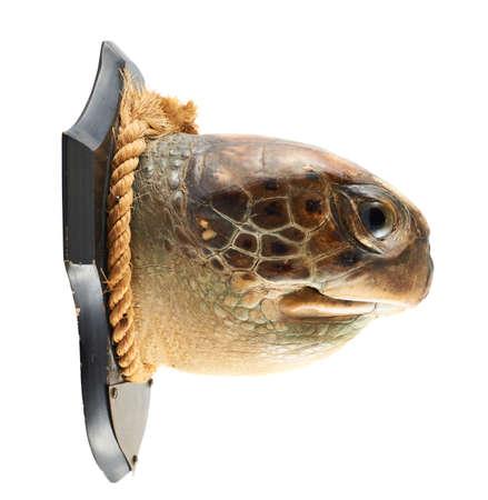 poacher: Turtle
