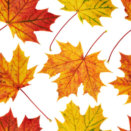 Autumn colorful maple-leaf seamless background pattern texture photo