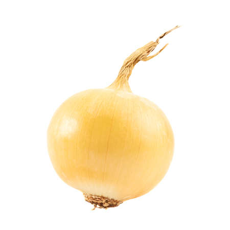pungent: Onion isolated over white background