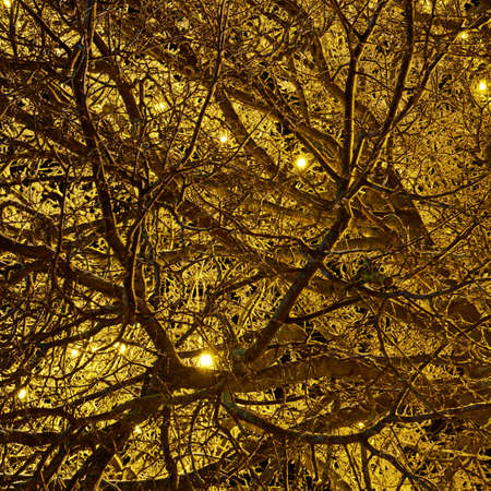 Outdoor tree branches decorated with yellow christmas lights as a festive abstract background composition photo