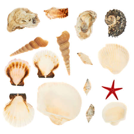 Set of multiple seashells isolated over the white background photo