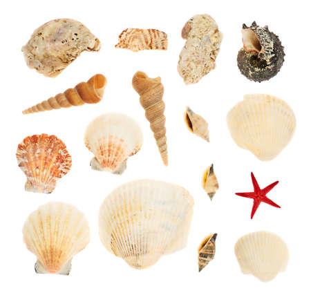 Set of multiple seashells isolated over the white background photo