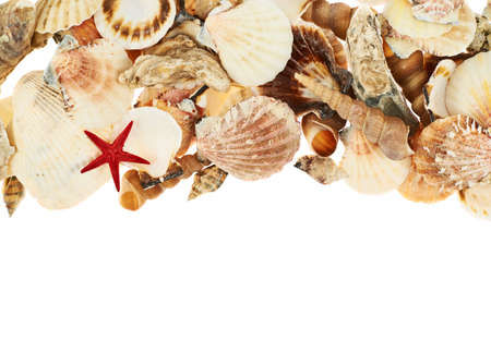 Seashells over the white surface as a background composition photo