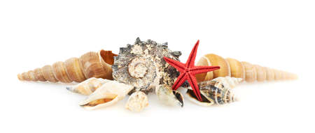 Pile of seashells isolated over the white background photo