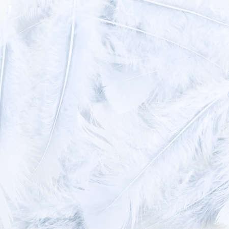 piuma bianca: Superficie coperta con le piume bianche come sfondo trama composizione