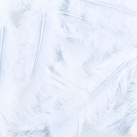 white feather: Surface covered with the white feathers as a background texture composition Stock Photo