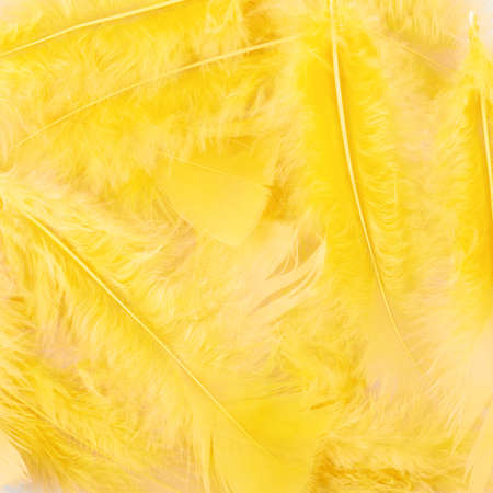 Surface covered with yellow feathers as a background texture composition