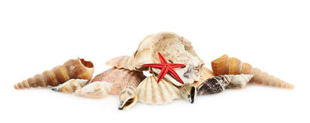 Pile of seashells isolated over the white background photo