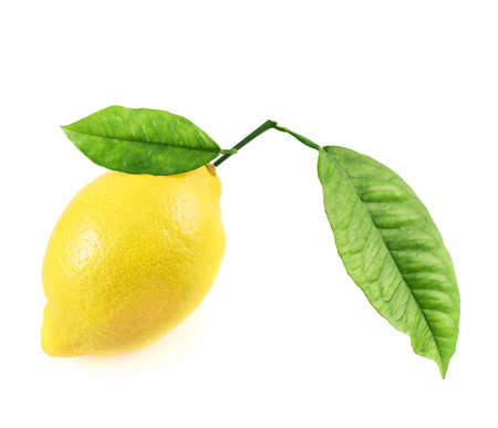 Fresh lemon fruit with the leaves isolated over the white background