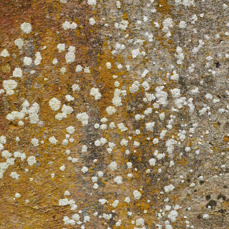 plaster mould: Concrete fragment covered with fungus as a background texture Stock Photo