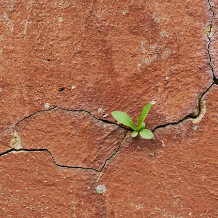 Cracked painted wall with the plant leaves growing inside fragment as a background texture photo