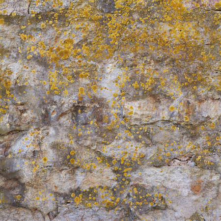 Old concrete wall covered with lichen  photo