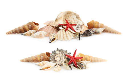 Pile of seashells isolated over the white background, set of two foreshortenings photo