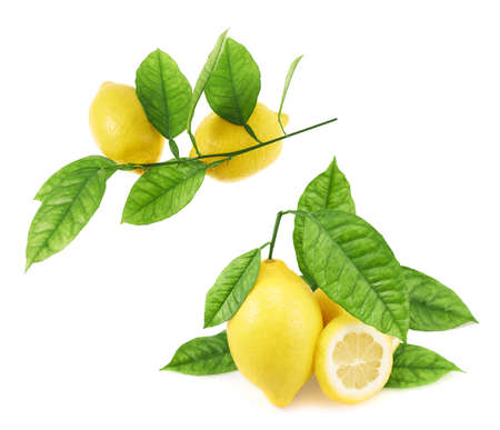 Lemons and leaves composition isolated over the white background, set of two images Stock Photo