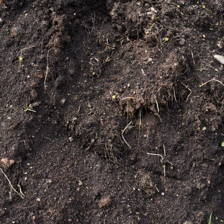 admixture: Fragment of an earth soil texture as an abstract background composition Stock Photo