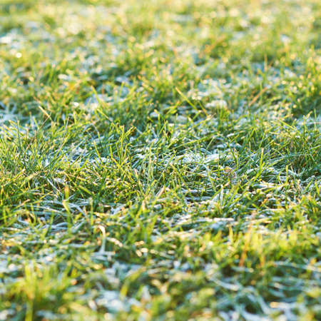 Frosted morning meadow green grass close-up photo photo