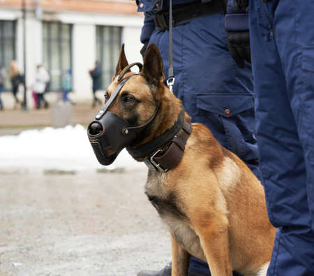 Border security dog in muzzle close-up composition Banque d'images