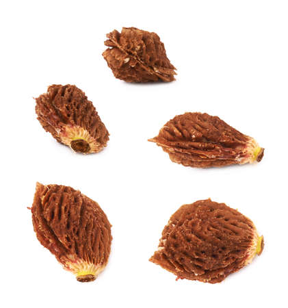 apricot kernels: Peach pit seed isolated over the white background, set of five different foreshortenings Stock Photo