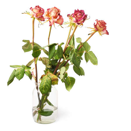 a jar stand: Dried pink roses in glass jar over the white isolated background