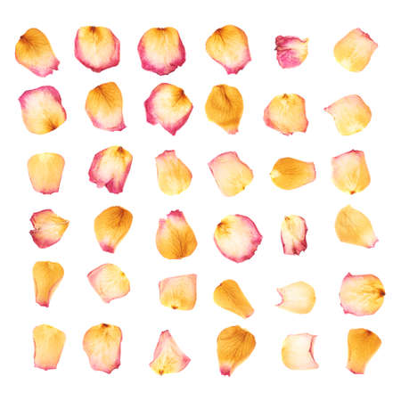 rose petals: Pink dried rose flower petals isolated over the white isolated background