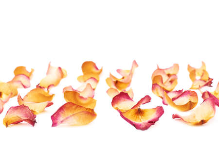 dried flower arrangement: White surface covered with pink old dried rose petals as a romantic background composition