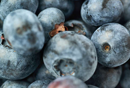 bilberry: Ripe bilberry or blueberry as texture background