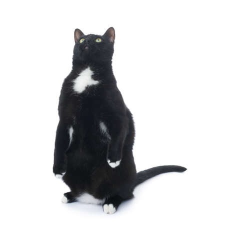 cat isolated: Standing on the floor black cat isolated over the white background Stock Photo
